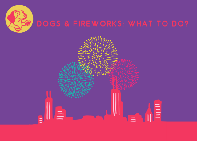 Dogs & Fireworks: What to do?