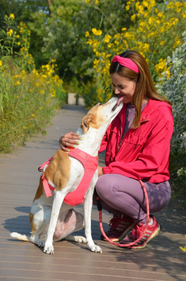 """Customer questions: """"Pet Sitting vs. Boarding. Which is better for my pet?"""""""
