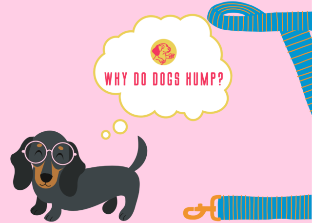 Why do dogs hump?