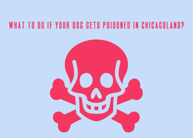 What to do if your dog gets poisoned in Chicagoland