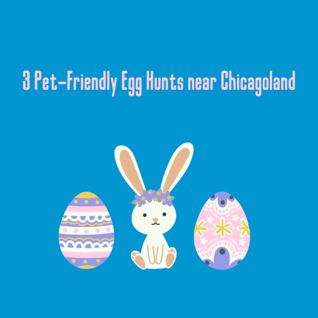 3 Pet-Friendly Egg Hunts near Chicagoland