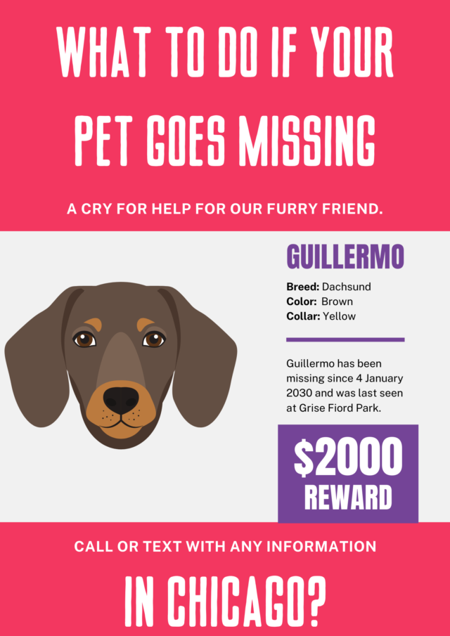 What to do if your pet goes missing in Chicago?