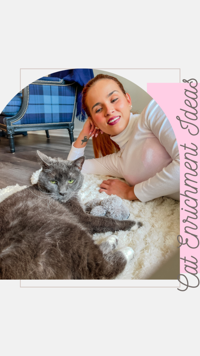 5 Fun/enrichment games to play with your cat